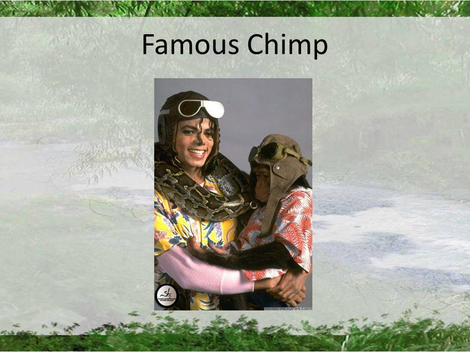 Famous Chimp