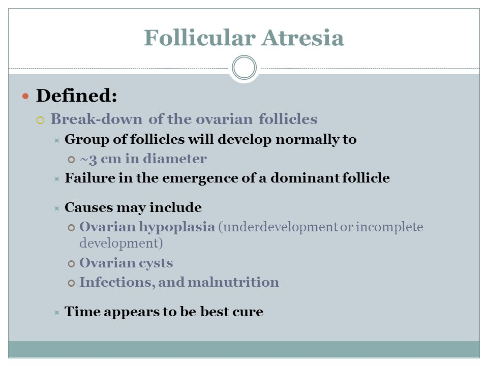 Follicular Atresia Defined:  Break-down of the ovarian follicles  Group of follicles will develop normally to ~3 cm in diameter  Failure in the emergence of a dominant follicle  Causes may include Ovarian hypoplasia (underdevelopment or incomplete development) Ovarian cysts Infections, and malnutrition  Time appears to be best cure
