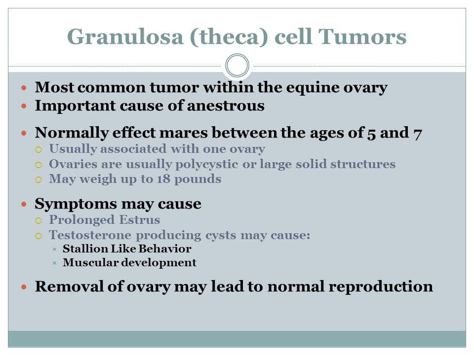 Granulosa (theca) cell Tumors Most common tumor within the equine ovary Important cause of anestrous Normally effect mares between the ages of 5 and 7  Usually associated with one ovary  Ovaries are usually polycystic or large solid structures  May weigh up to 18 pounds Symptoms may cause  Prolonged Estrus  Testosterone producing cysts may cause:  Stallion Like Behavior  Muscular development Removal of ovary may lead to normal reproduction