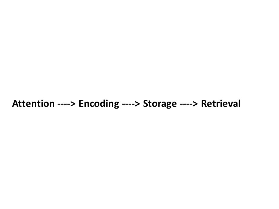 Attention ----> Encoding ----> Storage ----> Retrieval
