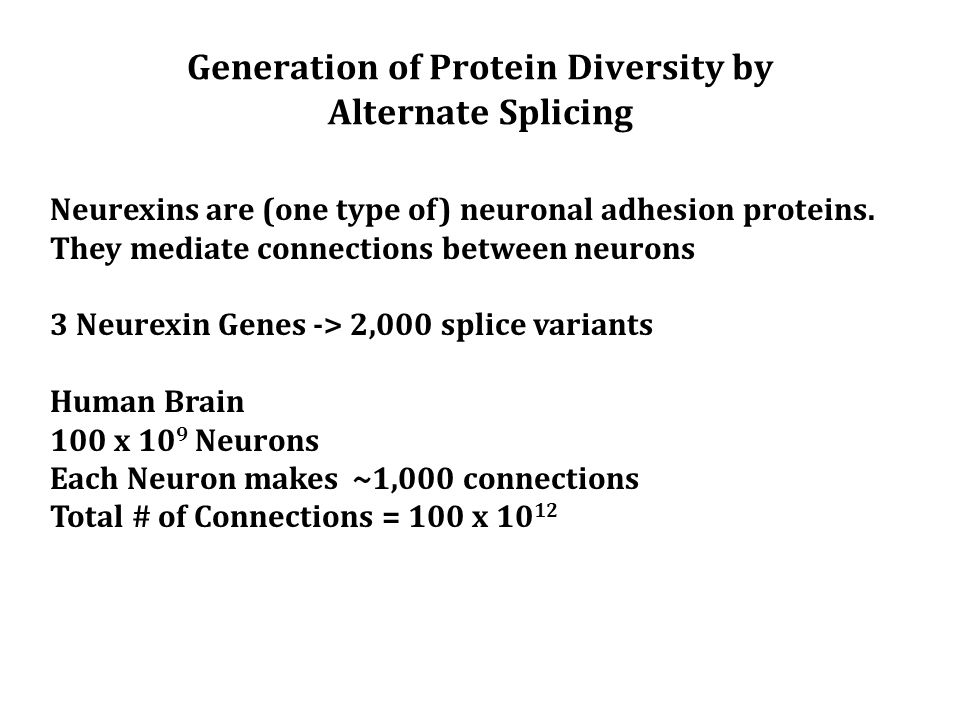 Generation of Protein Diversity by Alternate Splicing Neurexins are (one type of) neuronal adhesion proteins.