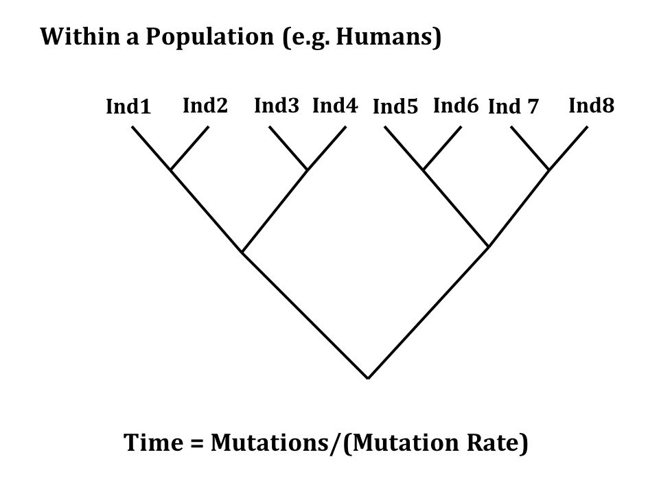 Within a Population (e.g.
