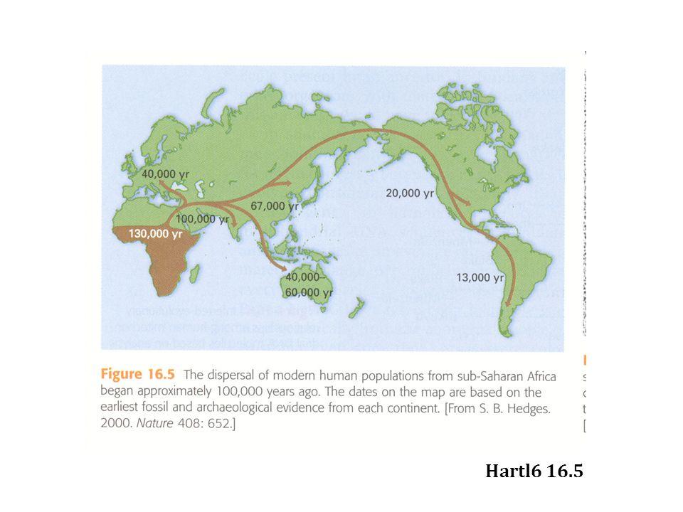 Hartl6 16.5