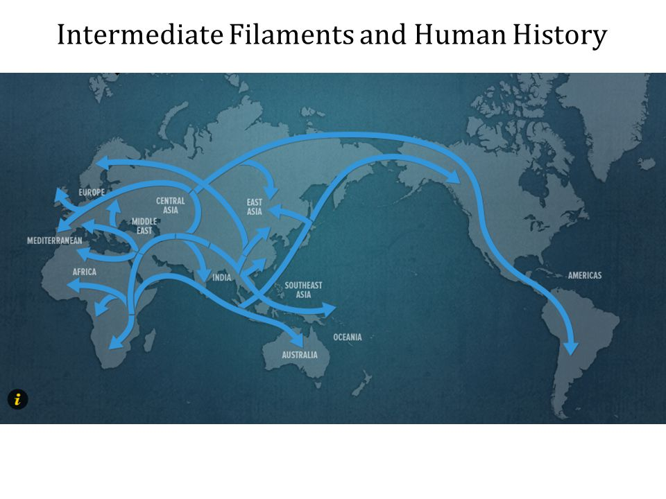 Intermediate Filaments and Human History