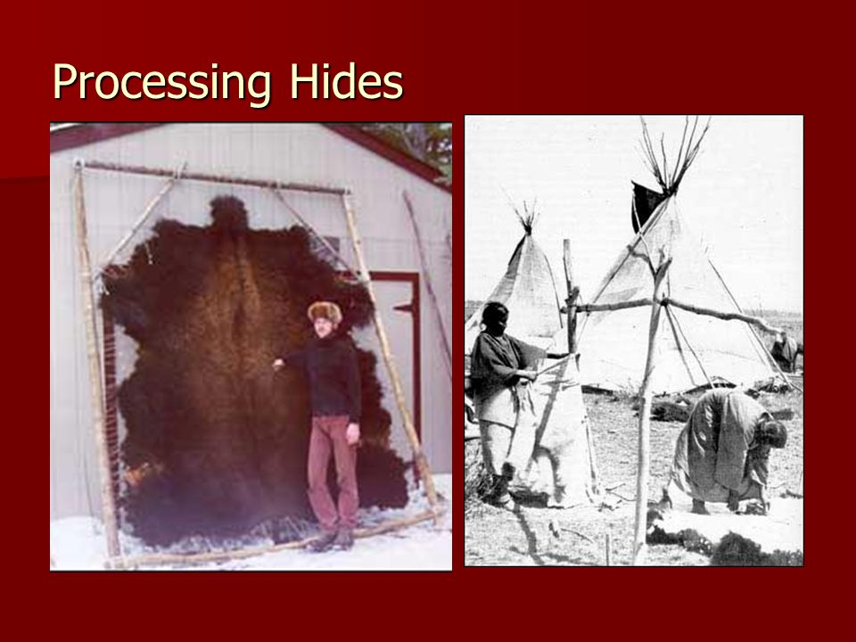 Processing Hides