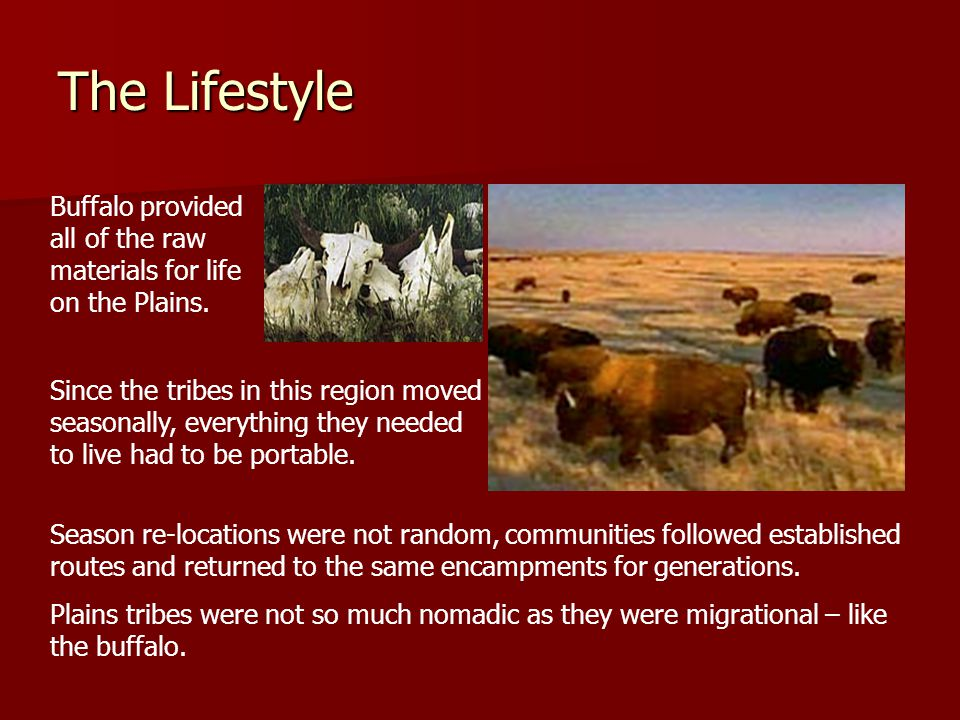 The Lifestyle Buffalo provided all of the raw materials for life on the Plains.