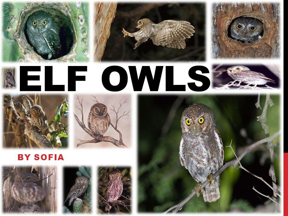 ELF OWLS BY SOFIA