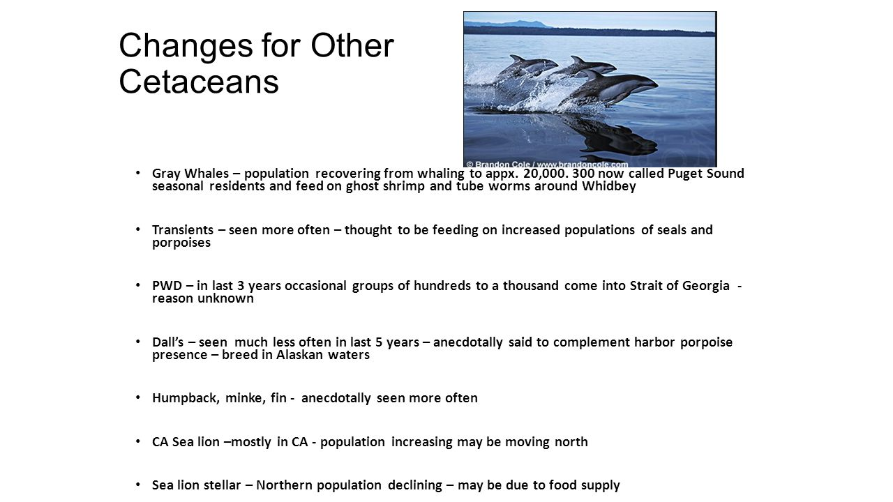 Changes for Other Cetaceans Gray Whales – population recovering from whaling to appx.