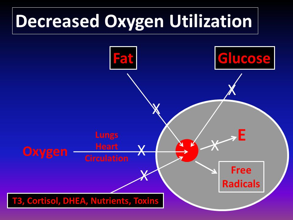 E Oxygen Lungs Heart Circulation FatGlucose T3, Cortisol, DHEA, Nutrients, Toxins Decreased Oxygen Utilization Free Radicals X X X X X