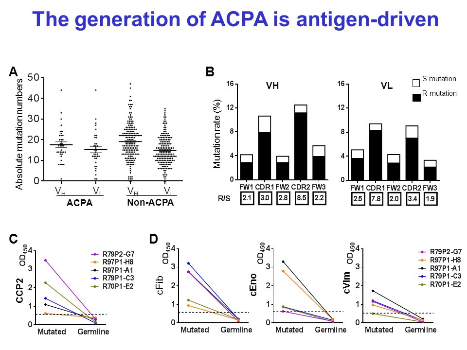 The generation of ACPA is antigen-driven Absolute mutation numbers AB R mutation S mutation C VHVH VLVL VHVH VLVL ACPA Non-ACPA Mutation rate (%) VL VH D CCP2 cFib cEno cVim