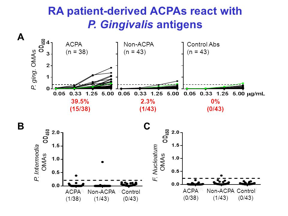 RA patient-derived ACPAs react with P.