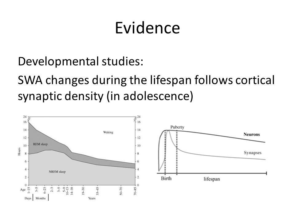 Evidence Developmental studies: SWA changes during the lifespan follows cortical synaptic density (in adolescence)
