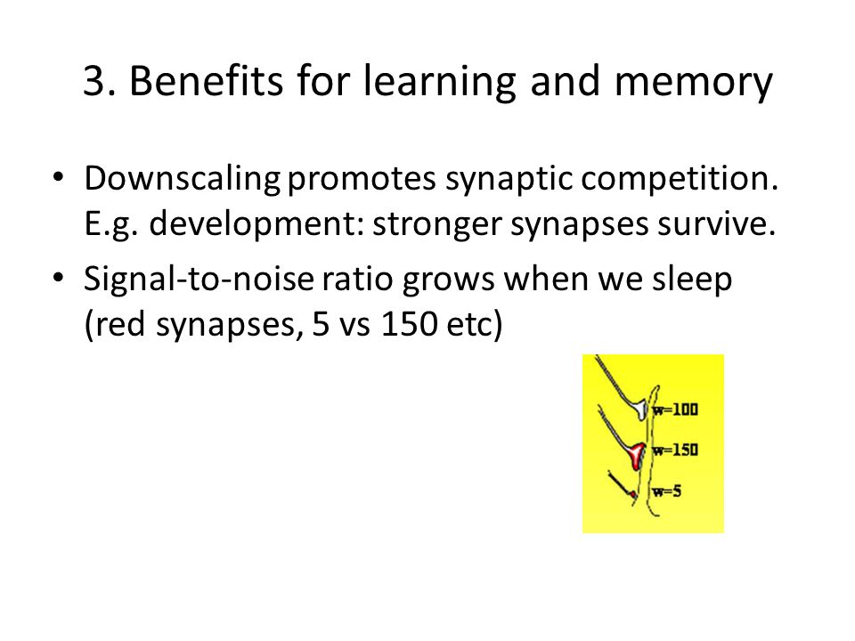 3. Benefits for learning and memory Downscaling promotes synaptic competition. E.g. development: stronger synapses survive. Signal-to-noise ratio grow