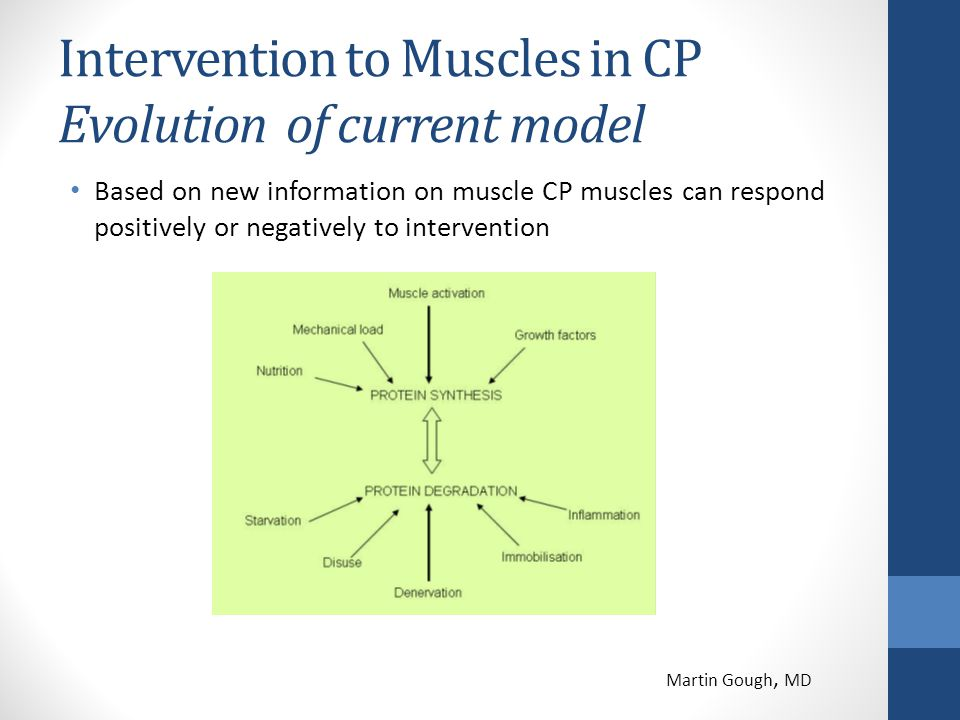 Intervention to Muscles in CP Evolution of current model Based on new information on muscle CP muscles can respond positively or negatively to interve