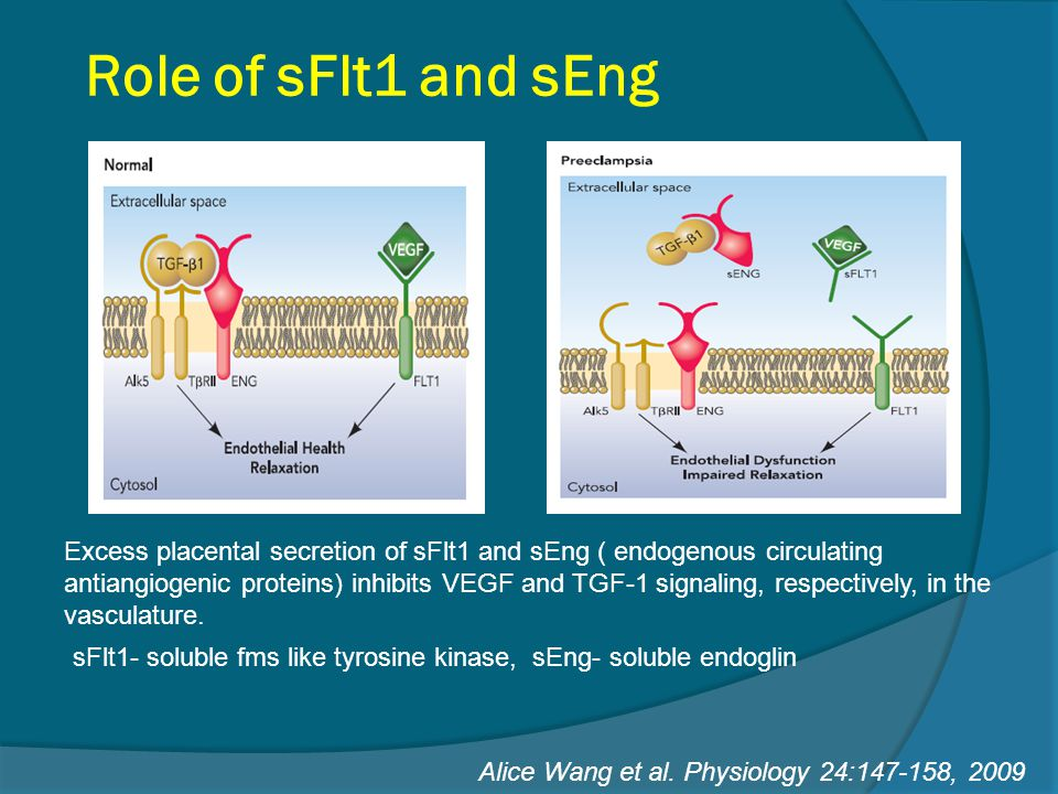 Role of sFlt1 and sEng Excess placental secretion of sFlt1 and sEng ( endogenous circulating antiangiogenic proteins) inhibits VEGF and TGF-1 signalin