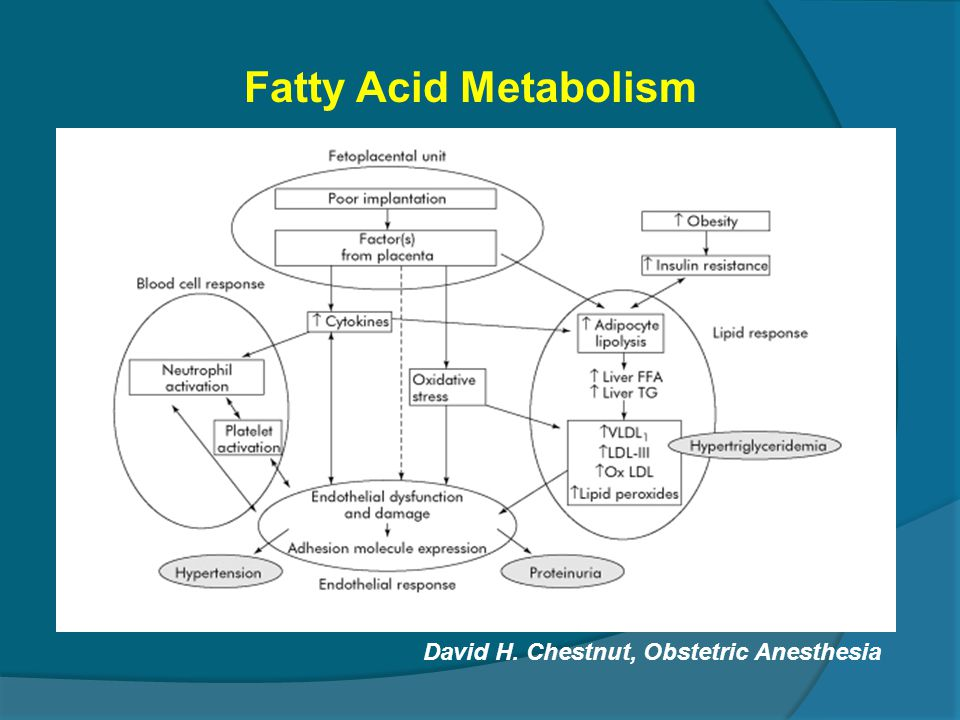 Fatty Acid Metabolism David H. Chestnut, Obstetric Anesthesia