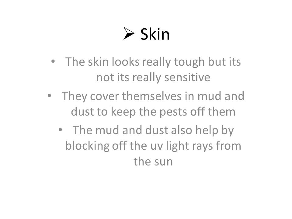  Skin The skin looks really tough but its not its really sensitive They cover themselves in mud and dust to keep the pests off them The mud and dust also help by blocking off the uv light rays from the sun