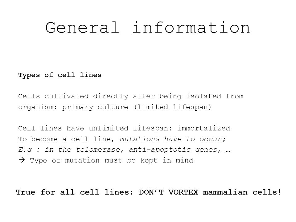 General information Types of cell lines Cells cultivated directly after being isolated from organism: primary culture (limited lifespan) Cell lines have unlimited lifespan: immortalized To become a cell line, mutations have to occur; E.g : in the telomerase, anti-apoptotic genes, …  Type of mutation must be kept in mind True for all cell lines: DON'T VORTEX mammalian cells!