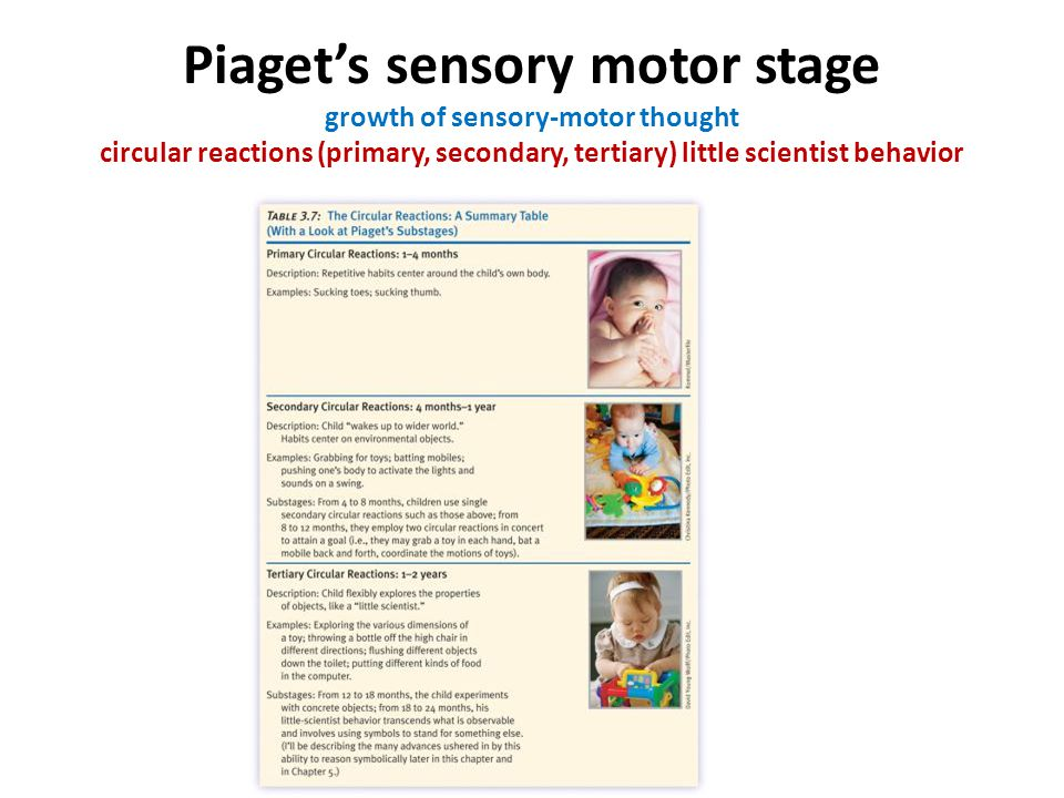 Piaget's sensory motor stage growth of sensory-motor thought circular reactions (primary, secondary, tertiary) little scientist behavior ition (Piaget's sensory- motor stage) *The growth of sensory motor thought: learning by acting; stages of thinking (Circular reactions—primary, secondar tertiary—little scientist behavior) *The evolution of the object concept an means-end behavior