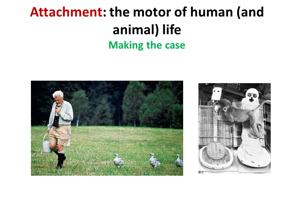 Attachment: the motor of human (and animal) life Making the case