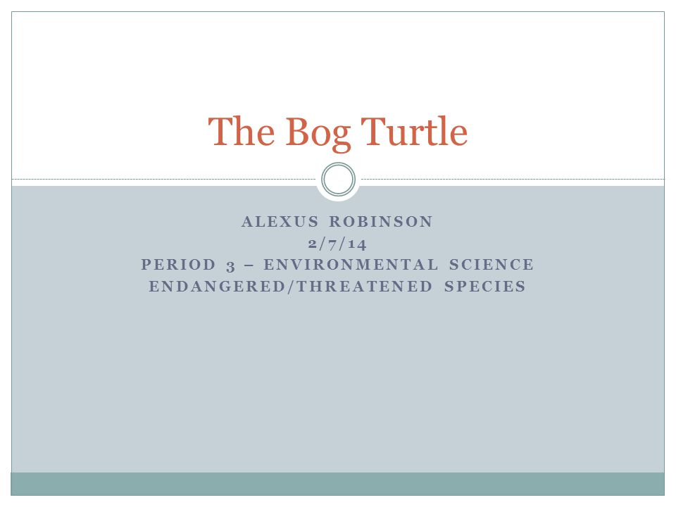 ALEXUS ROBINSON 2/7/14 PERIOD 3 – ENVIRONMENTAL SCIENCE ENDANGERED/THREATENED SPECIES The Bog Turtle