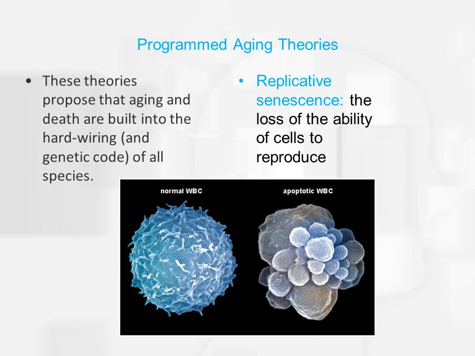 Programmed Aging Theories These theories propose that aging and death are built into the hard-wiring (and genetic code) of all species.