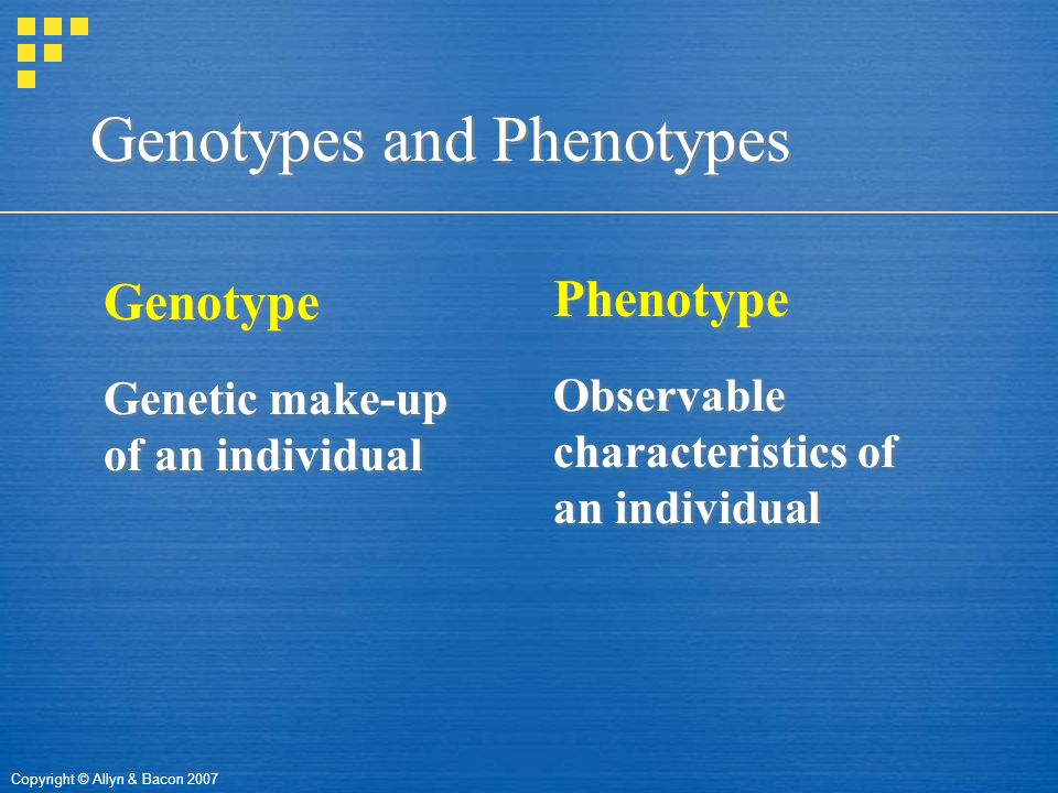Copyright © Allyn & Bacon 2007 Genotypes and Phenotypes Genotype Genetic make-up of an individual Genotype Genetic make-up of an individual Phenotype Observable characteristics of an individual