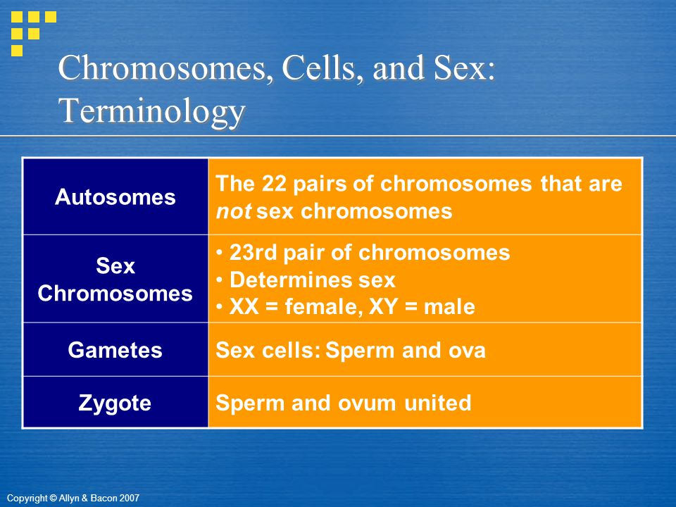 Copyright © Allyn & Bacon 2007 Chromosomes, Cells, and Sex: Terminology Autosomes The 22 pairs of chromosomes that are not sex chromosomes Sex Chromosomes 23rd pair of chromosomes Determines sex XX = female, XY = male GametesSex cells: Sperm and ova ZygoteSperm and ovum united