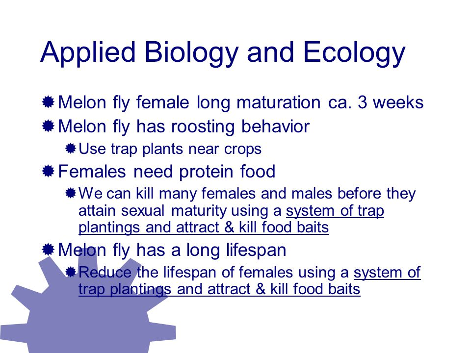 Applied Biology and Ecology  Melon fly female long maturation ca.