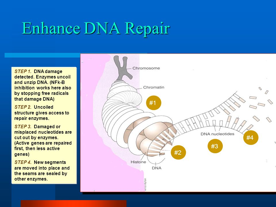 NF-kB / DNA repair-- control DNA damage and your health Second primary source of free radicals is inflammation NF-kB inhibition reduces this source Regardless the source, DNA repair removes DNA damage These processes are controlled by dietary factors