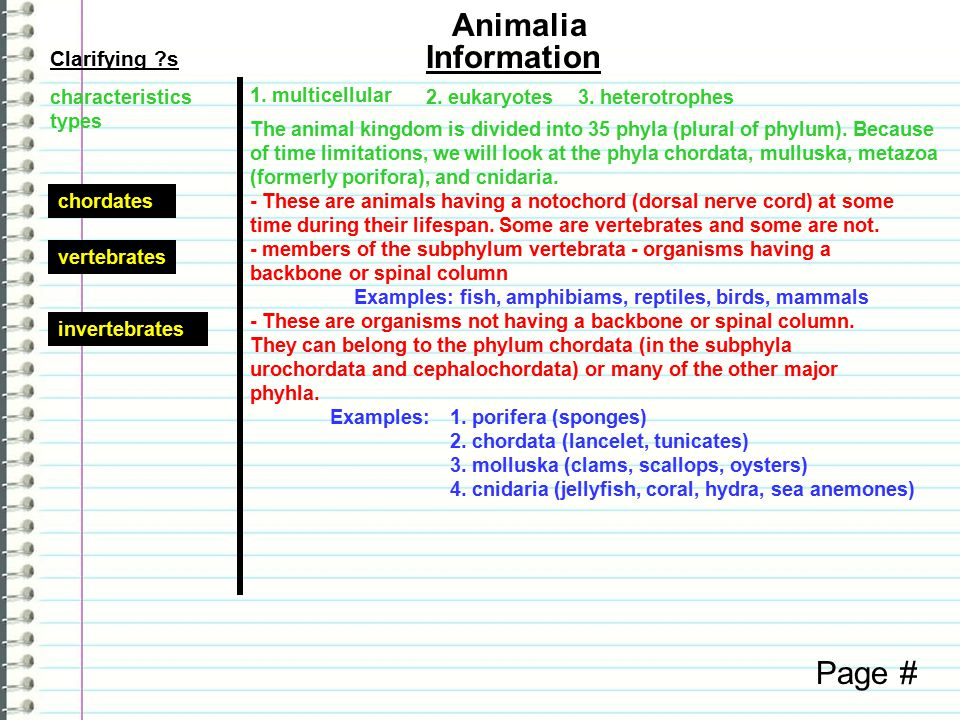 Know What do you know about animals as a group.