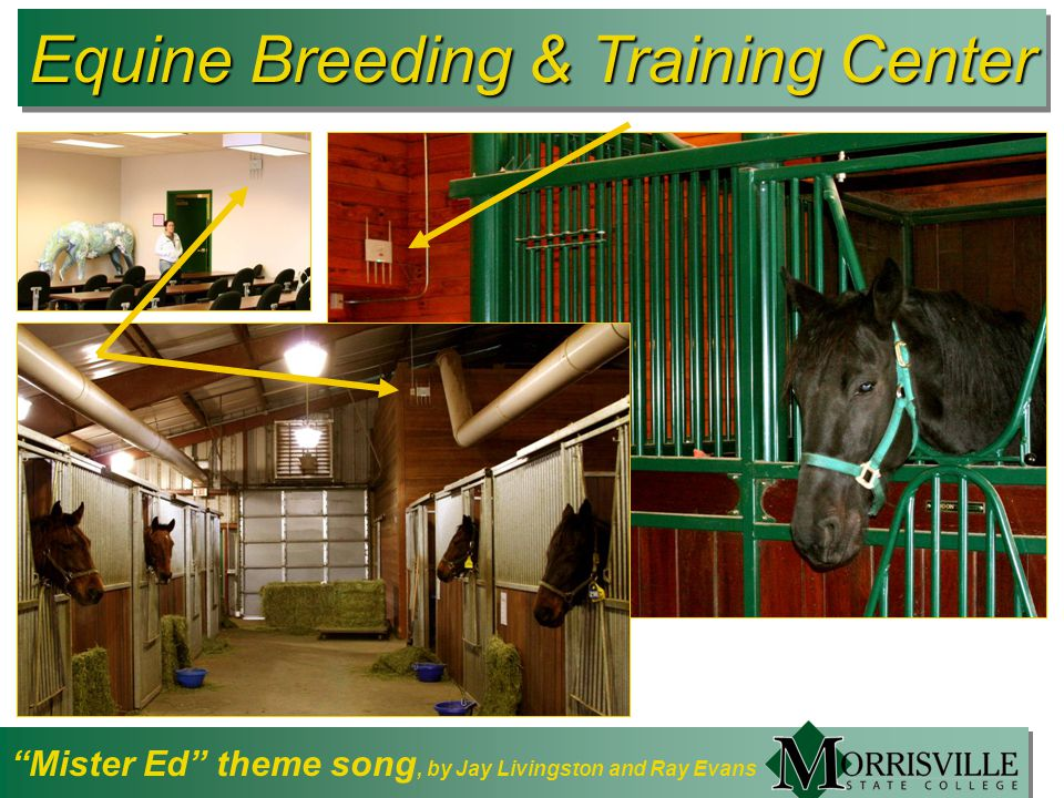 Equine Breeding & Training Center Mister Ed theme song, by Jay Livingston and Ray Evans