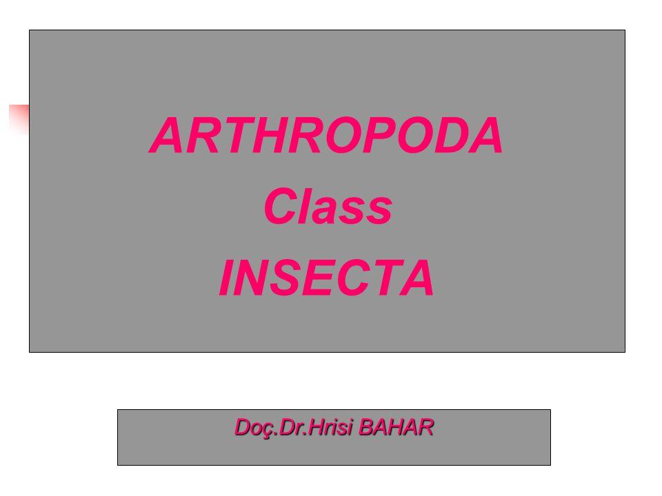 Phylum Arthropoda Subphylum CRUSTACEAE ● Class Arachnida ● Class Insecta