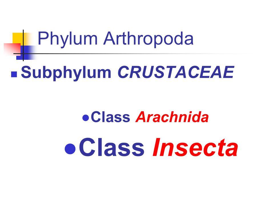 Class insecta D i p t e r a Nematosera (mosquitoes, black flies) Brachisera (flies) Anoplura (Lice) Cins Pediculus Phthirus Heteroptera (Bugs) Cins Cimex Oeciacus Triatoma Rhodnius Panstrongylus Cins Anopheles Culex Aedes Simulium Phlebotomus Lutzomyia Cins Musca, Glossina, Calliphora, Cochliomyia,Cordylobia, Lucilia, Sarcophaga Wohlfahrtia,Gasterophilus Hypoderma,Cuterebra Siphonaptera (Fleas) Cins Pulex Ctenocephalides Ceratophyllus Archaeopsylla Xenopsylla Tunga