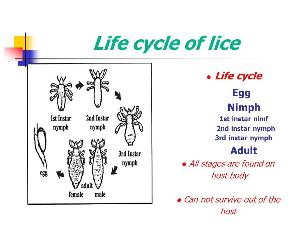 Life cycle of lice ● Life cycle Egg Nimph 1st instar nimf 2nd instar nymph 3rd instar nymph Adult ● All stages are found on host body ● Can not surviv