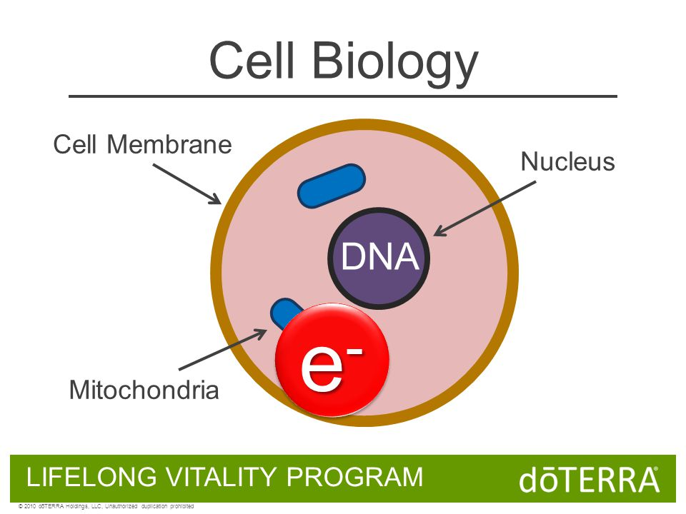 Cell Biology DNA Cell Membrane Nucleus Mitochondria LIFELONG VITALITY PROGRAM © 2010 dōTERRA Holdings, LLC, Unauthorized duplication prohibited e-e-e-e- e-e-e-e-