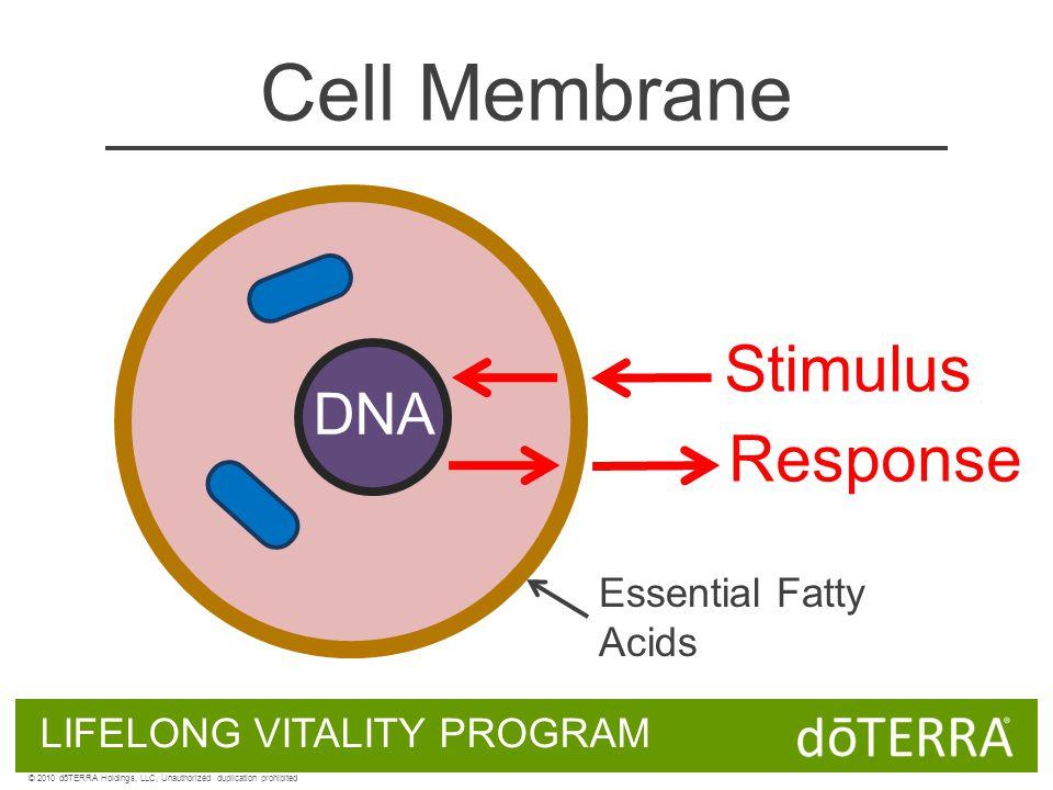 Cell Membrane DNA LIFELONG VITALITY PROGRAM © 2010 dōTERRA Holdings, LLC, Unauthorized duplication prohibited Stimulus Response Essential Fatty Acids