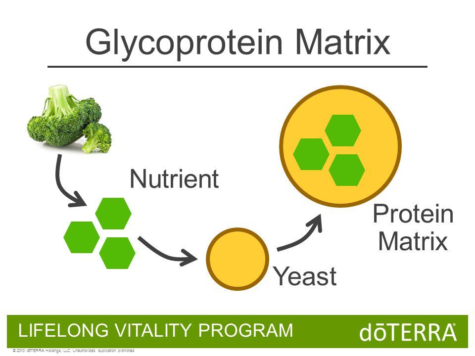 Glycoprotein Matrix LIFELONG VITALITY PROGRAM Nutrient Yeast © 2010 dōTERRA Holdings, LLC, Unauthorized duplication prohibited Protein Matrix