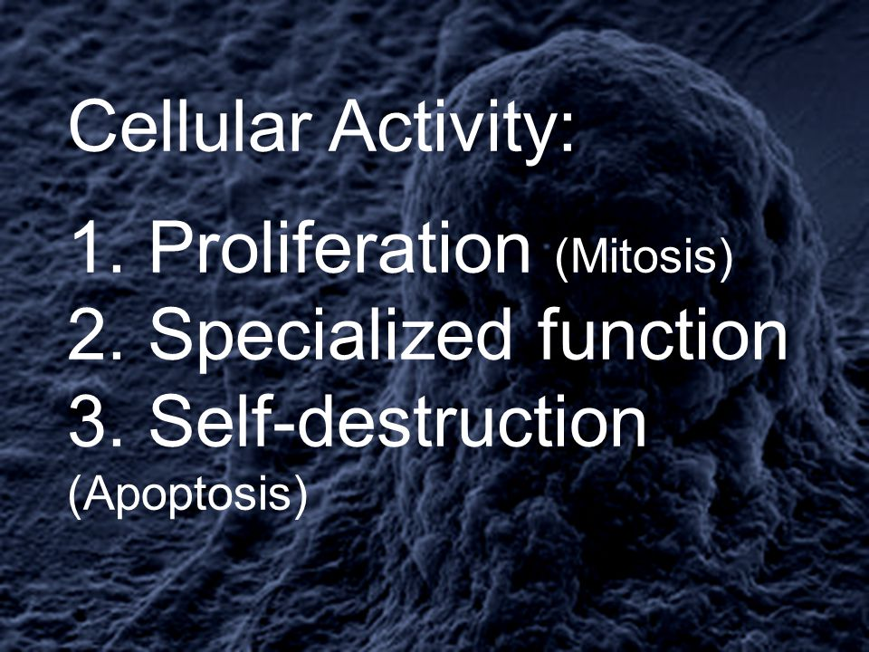 Cellular Activity: 1. Proliferation (Mitosis) 2. Specialized function 3.