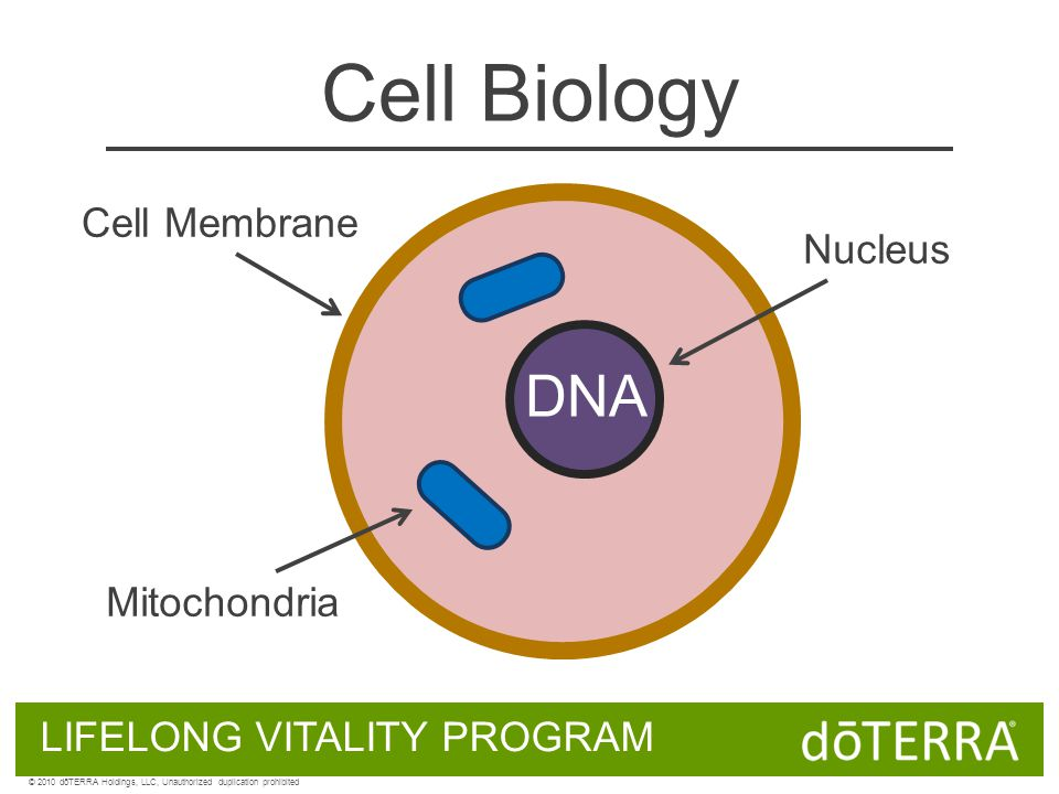 Cell Biology DNA Cell Membrane Nucleus Mitochondria LIFELONG VITALITY PROGRAM © 2010 dōTERRA Holdings, LLC, Unauthorized duplication prohibited