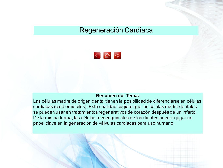 Regeneración Cardiaca Resumen del Tema: Las células madre de origen dental tienen la posibilidad de diferenciarse en células cardiacas (cardiomiocitos