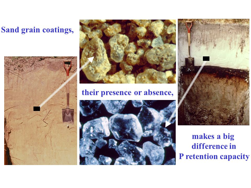 Sand grain coatings, their presence or absence, makes a big difference in P retention capacity
