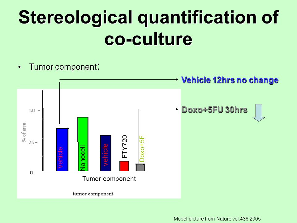 Stereological quantification of co-culture Tumor componentTumor component : Vehicle 12hrs no change Doxo+5FU 30hrs Model picture from Nature vol.436 2005 Vehicle Nanocell vehicle FTY720 Doxo+5F Tumor component