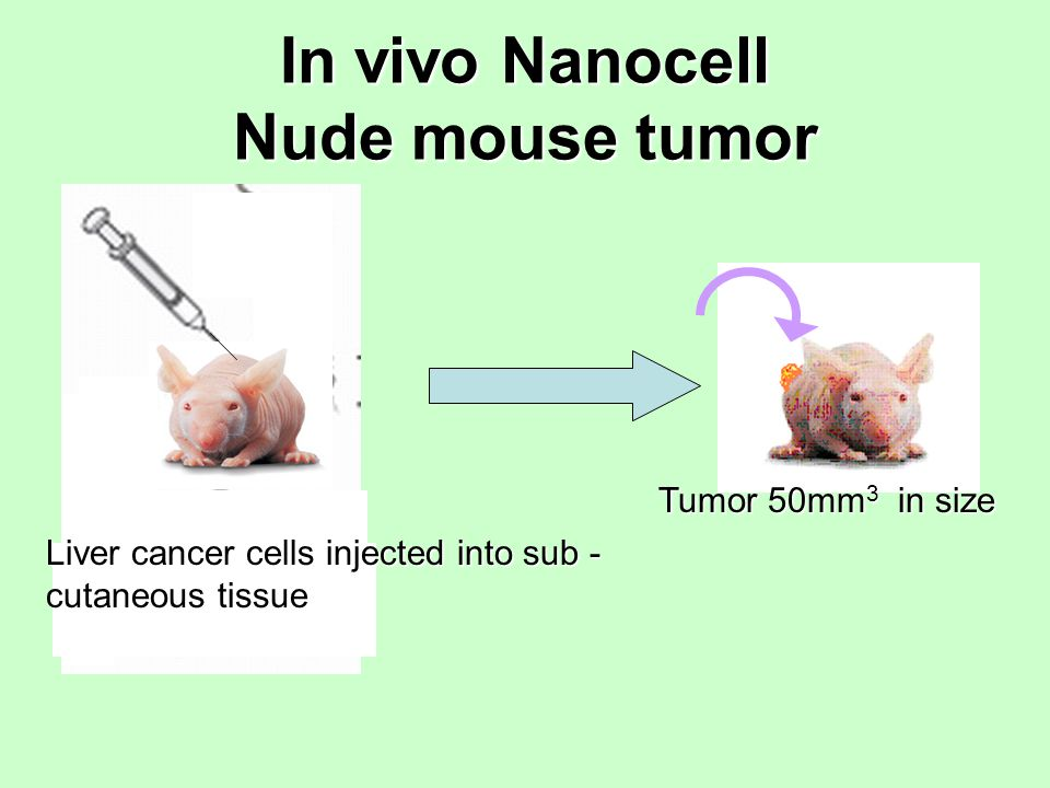 In vivo Nanocell Nude mouse tumor Liver cancer cells injected into sub - cutaneous tissue Tumor 50mm 3 in size