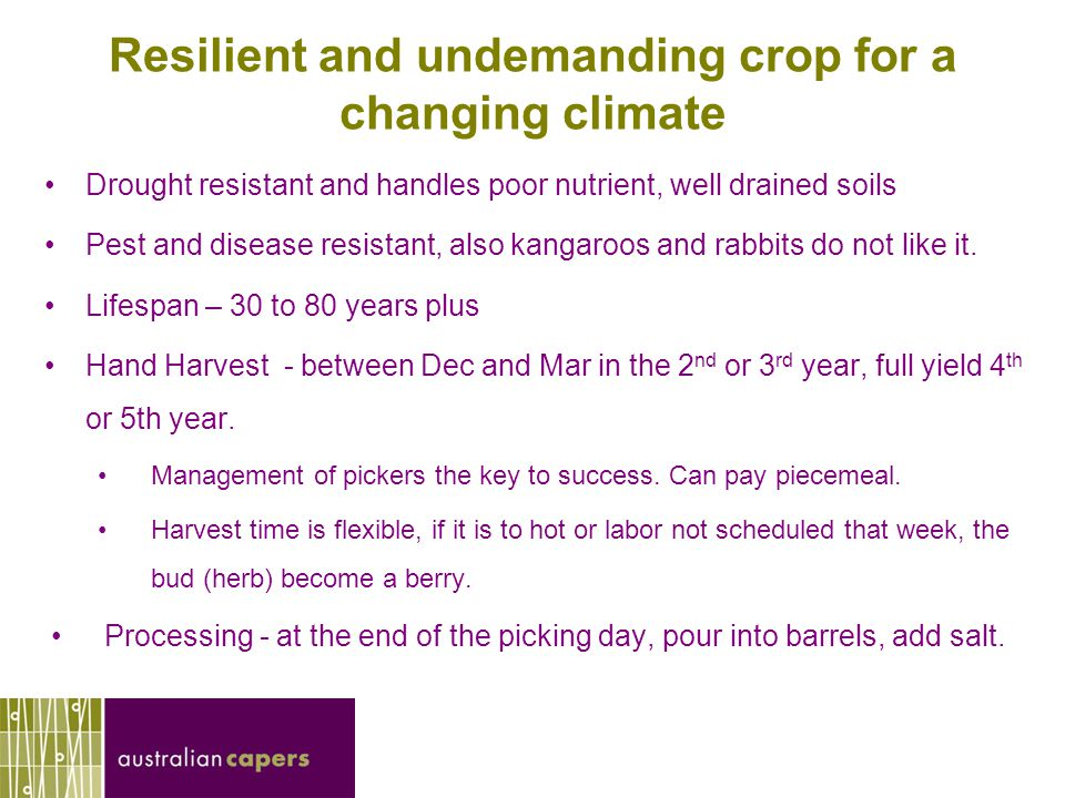 Seeking four good growers in SA Wishing to diversify income stream.