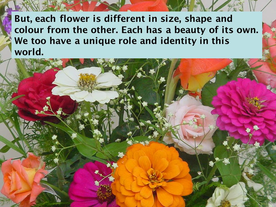 But, each flower is different in size, shape and colour from the other.