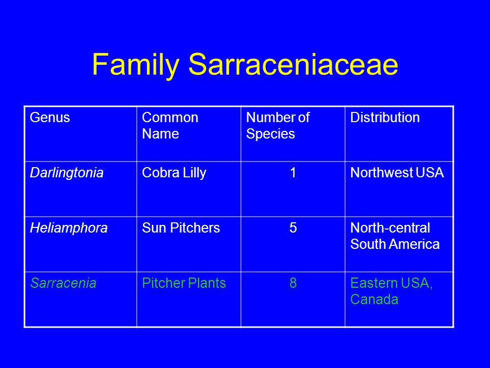 Family Sarraceniaceae GenusCommon Name Number of Species Distribution DarlingtoniaCobra Lilly1Northwest USA HeliamphoraSun Pitchers5North-central South America SarraceniaPitcher Plants8Eastern USA, Canada