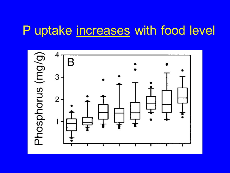 P uptake increases with food level