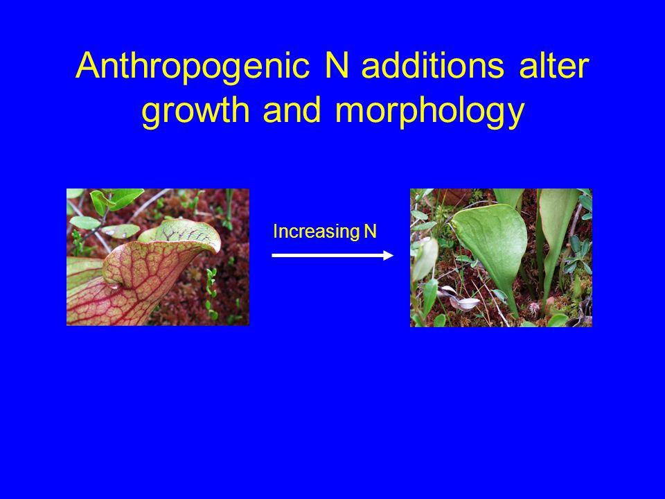 Anthropogenic N additions alter growth and morphology Increasing N