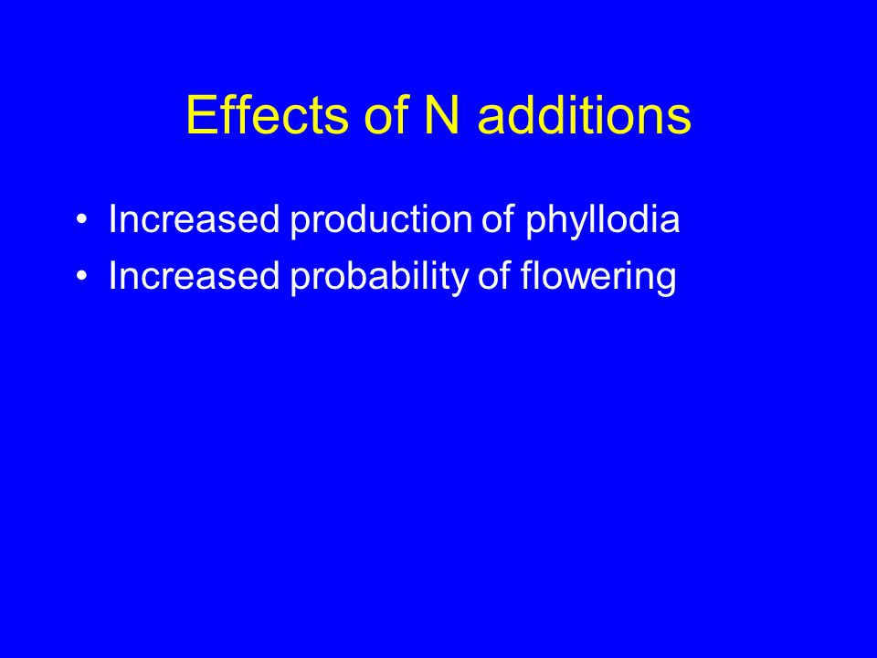 Effects of N additions Increased production of phyllodia Increased probability of flowering